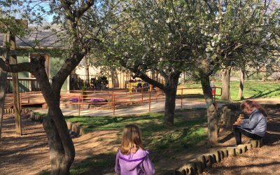 A First Grader's Morning in Spring