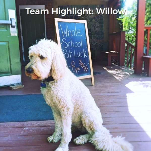 Willow – Team Highlight